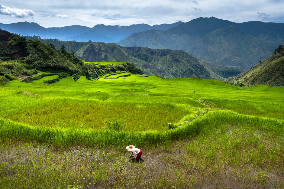 Planting Rice on Stoned Terraces
