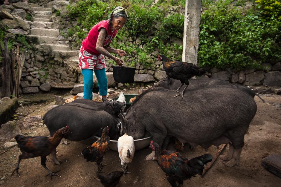 Fang-od feeding pigs
