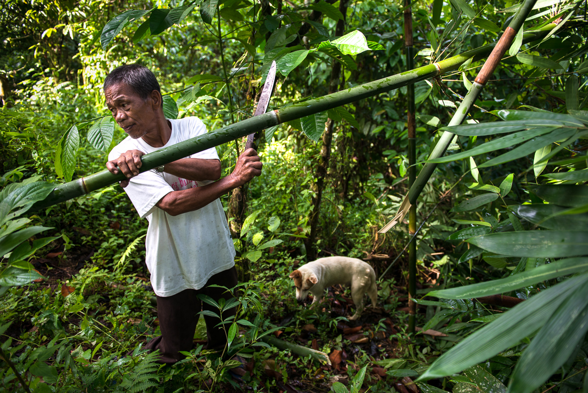 Collecting bamboo for liorot