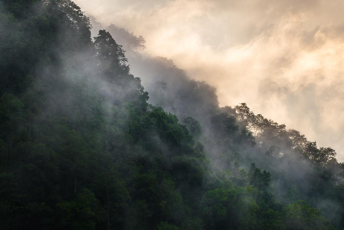 Compostela valley forest after a rainstorm