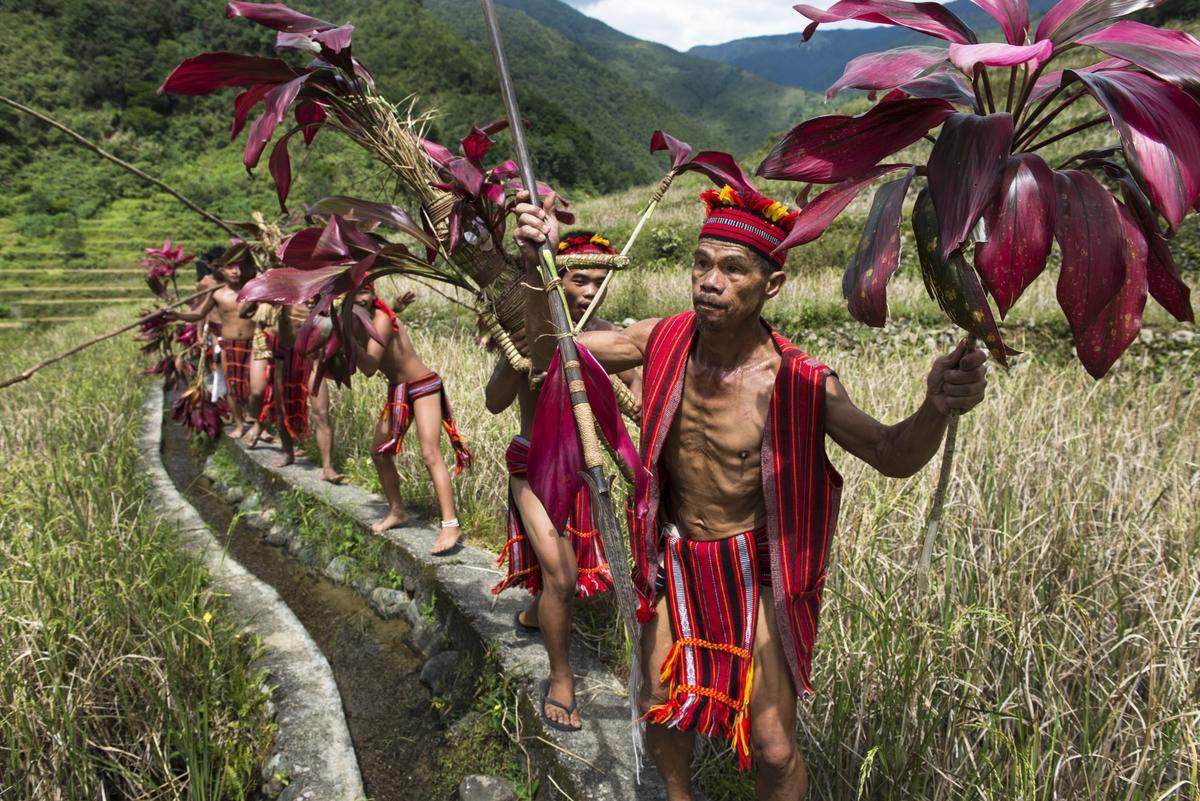 Punnuk Rice Harvest Ritual - Ifugao