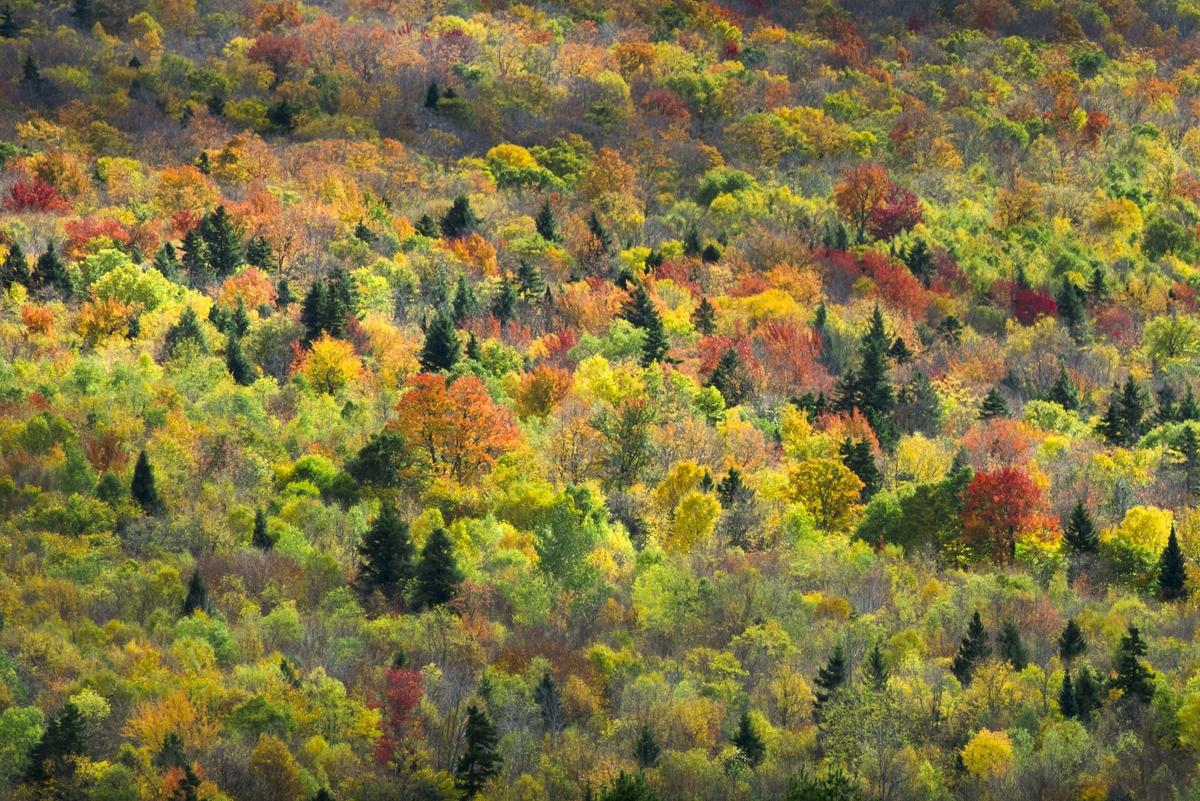 Peak colors of autumn